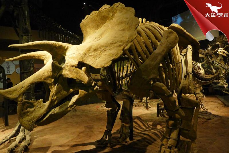 仿真恐龙骨架-三角龙