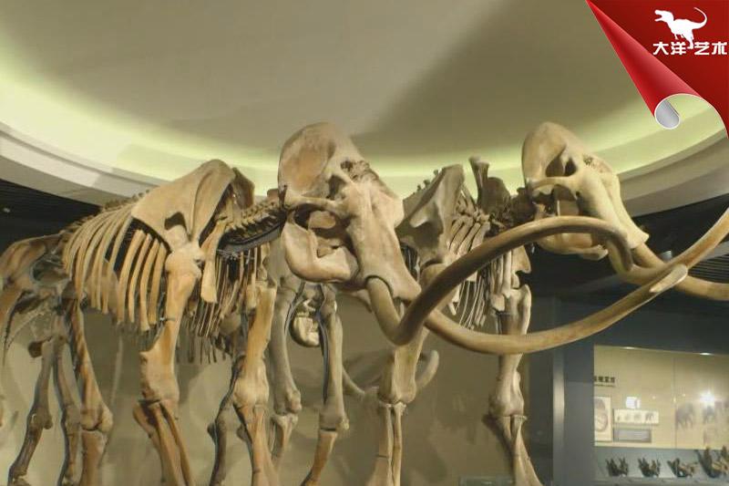 仿真骨架标本模型-动物骨架